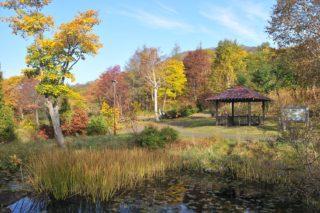 ニセコアンヌプリ森林公園の紅葉