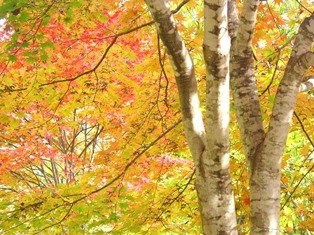 昆布温泉郷の紅葉